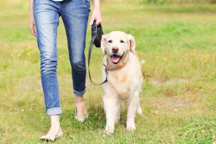 How far do I need to walk my dog?
